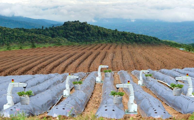 农机机器人机械臂运作的技术 免版税库存图片