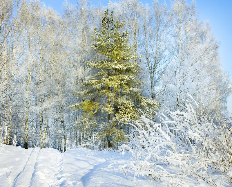 农村与森林、小径和蓝天的冬天多雪的风景 免版税库存照片