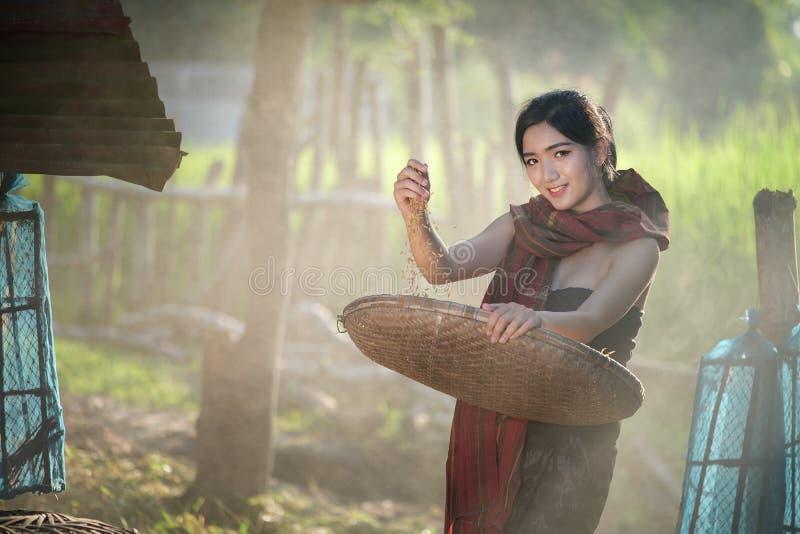 农村亚裔妇女生活方式在领域乡下泰国 免版税库存图片
