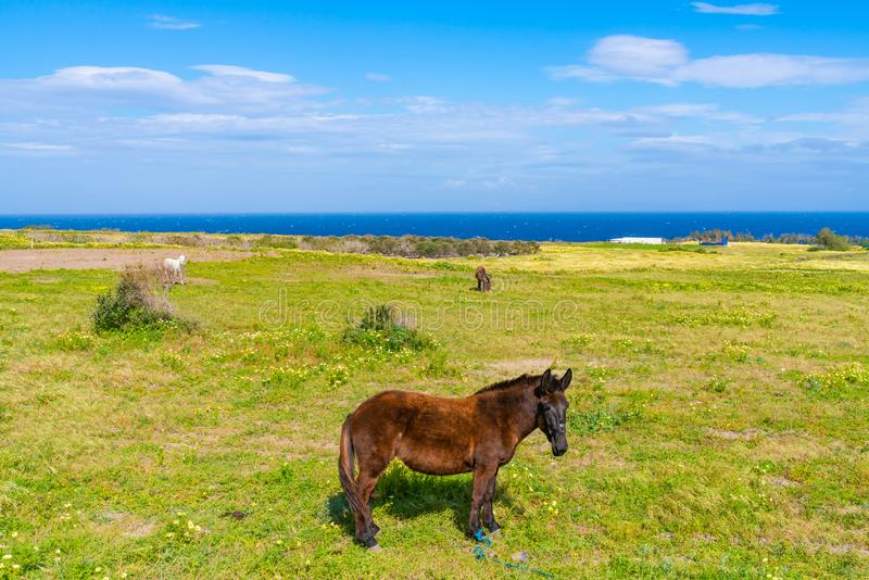 农村圣托里尼风景有爱琴海,希腊看法  免版税库存图片