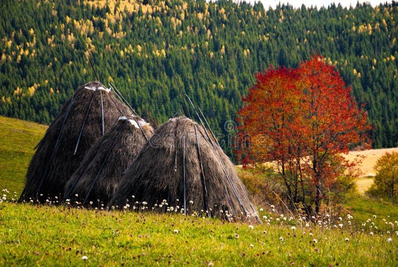 农村场面在秋天 库存照片