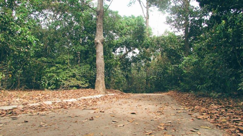农村孟加拉 免版税库存图片