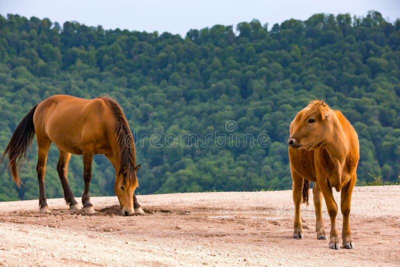 农村春天牧场地风景在索契,俄罗斯 库存图片