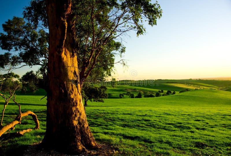 农村澳大利亚的横向 免版税图库摄影