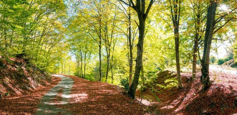 农村秋天的路 库存图片