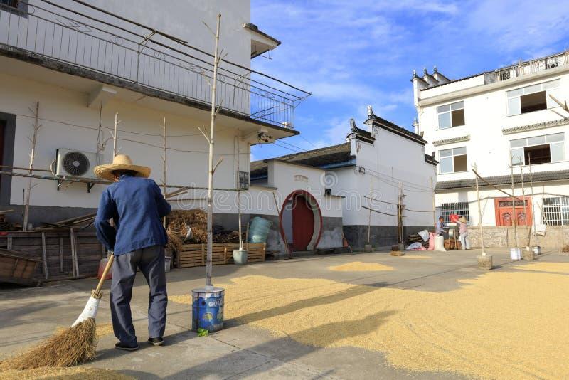 农村老农夫清洁为干燥五谷,多孔黏土rgb研了 免版税库存图片