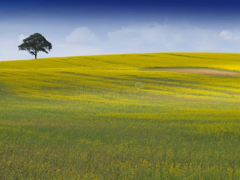 农村英国的横向 图库摄影
