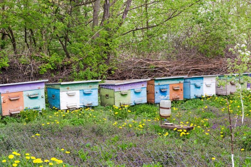 农村蜂房的片段有蜂房行的春天 库存照片