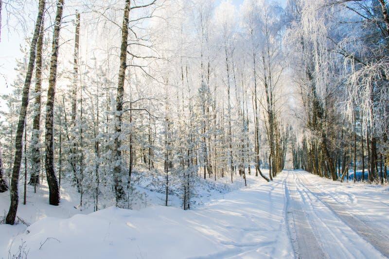 农村路在冬天,桦树 免版税库存照片