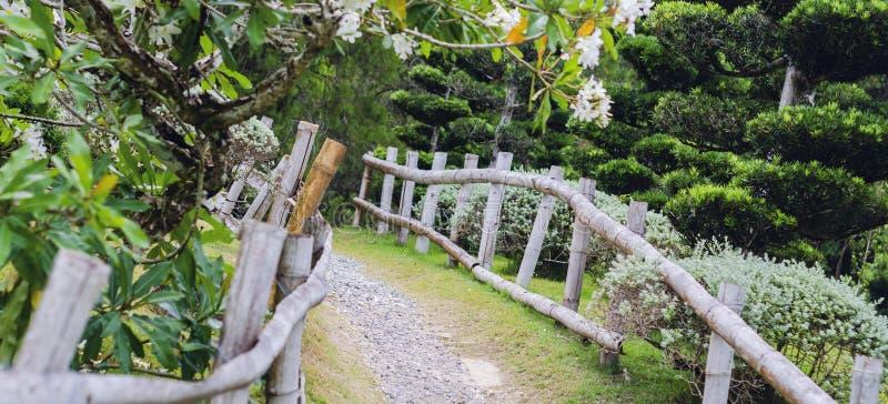 农村路在有绿色口气美丽的树的日本庭院里  免版税图库摄影