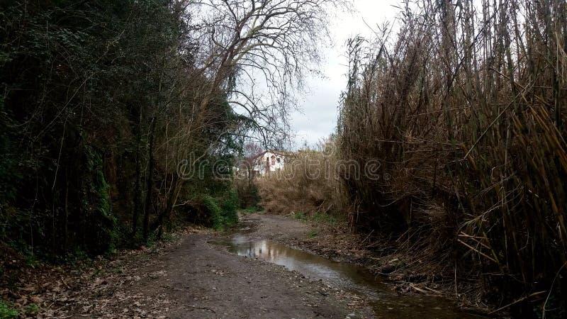农村道路穿过乡下 免版税图库摄影