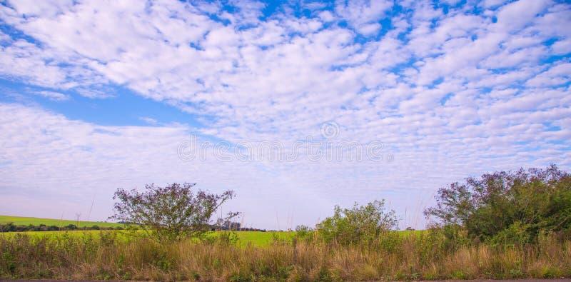 农村风景在农场在巴西01 免版税图库摄影