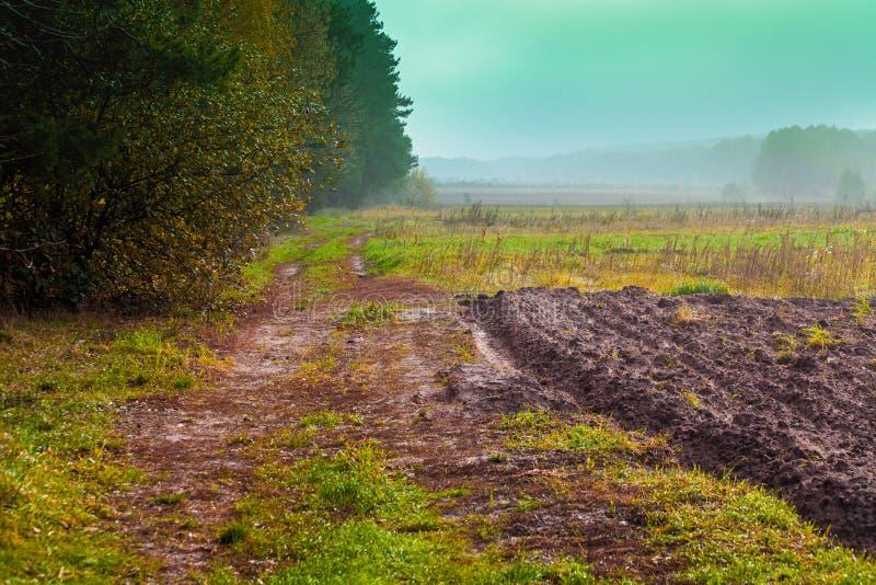 农村风景早晨 在森林附近的被犁的领域 库存图片