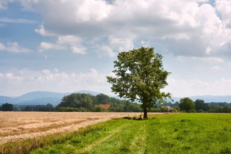 农村风景骑自行车者休息在一棵树下在Moravian西莱亚西地区以山西喀尔巴阡山为背景 免版税库存图片