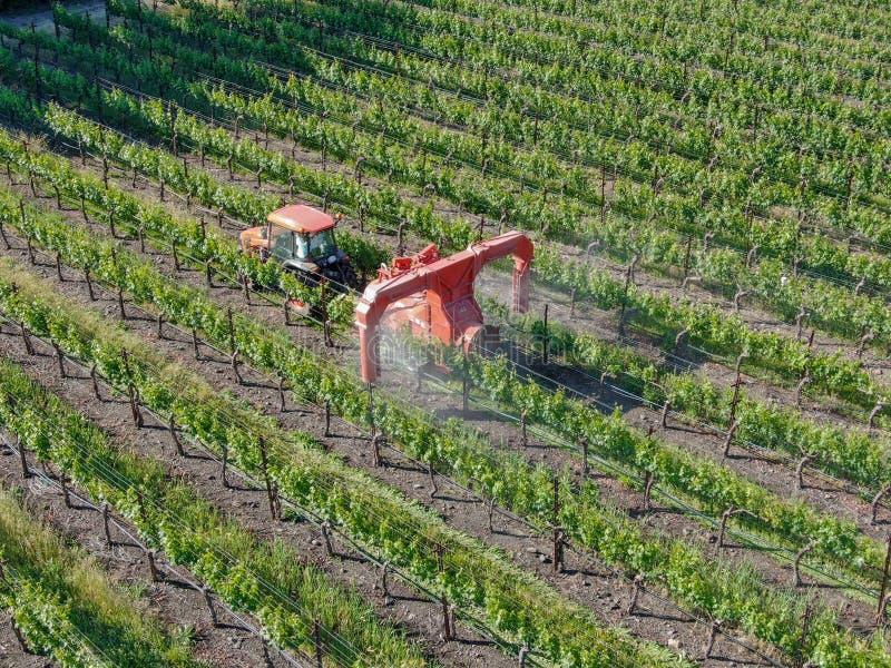 农用拖拉机喷洒的杀虫剂&杀虫药除草药在绿色葡萄园领域 库存图片