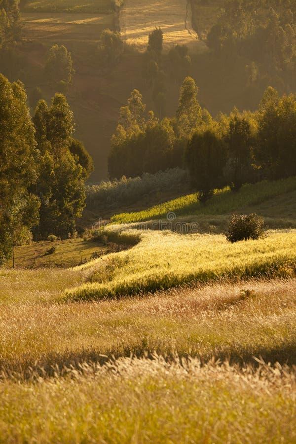 农田在埃塞俄比亚 库存图片