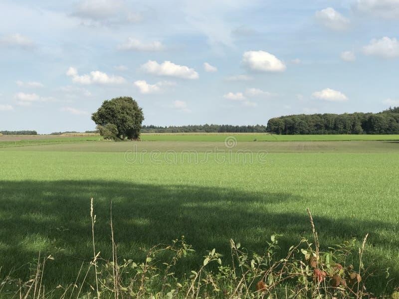 农田在德伦特省荷兰 库存照片