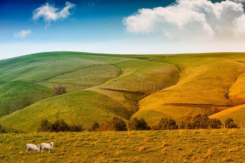 农田在澳大利亚 库存图片