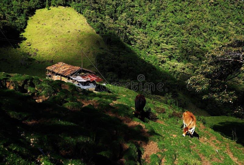 农田在Salento附近的Cordiliera中央 免版税库存图片