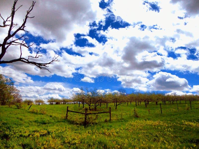 农田在Simsbury康涅狄格 库存照片