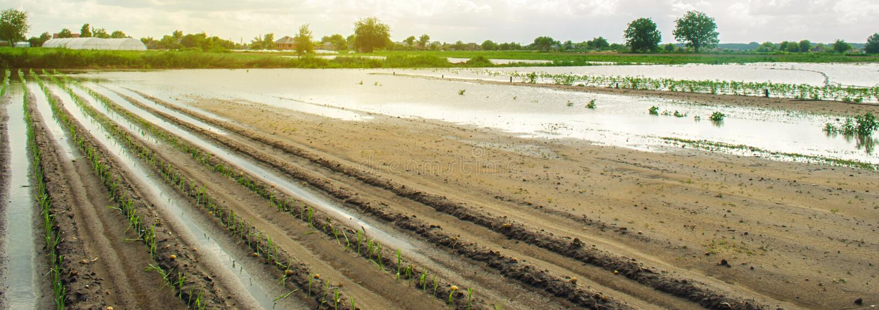 农田影响受充斥 洪水区域 雨的后果 农业和种田 自然灾害和 库存照片