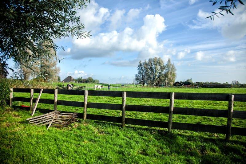 农田 农夫和母牛在一个绿色的草甸 免版税库存图片