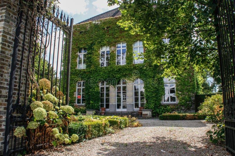 农舍在比利时纠缠了与鲜绿色的常春藤和入口 免版税库存图片