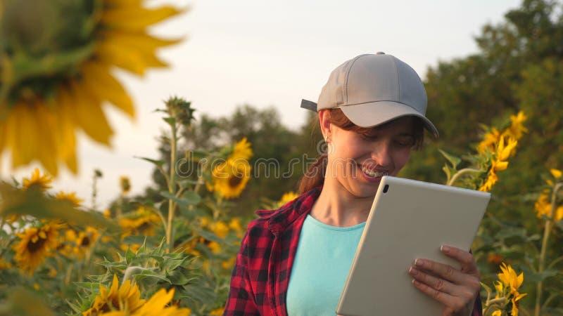 农艺师学习向日葵庄稼和笑 愉快的农夫妇女与在向日葵领域的一种片剂一起使用 库存照片