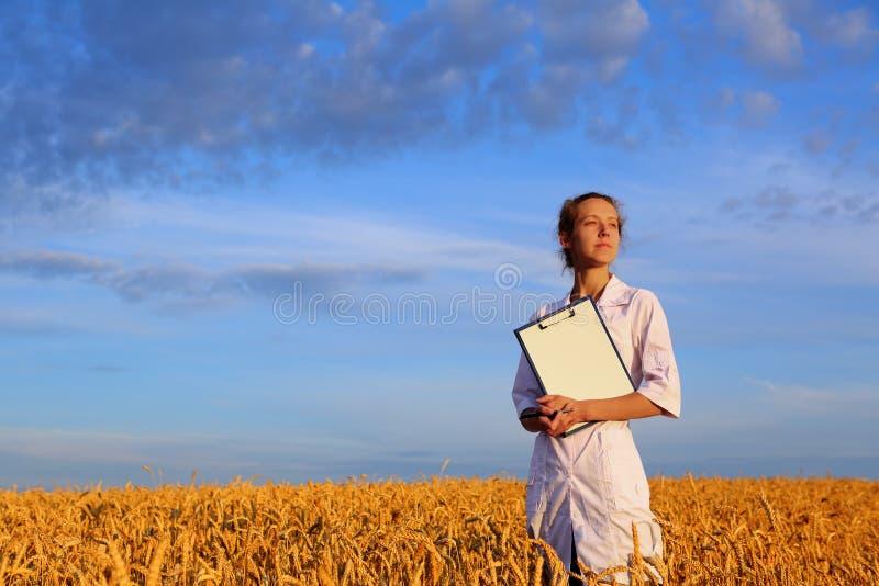 农艺师或一名学生或者一位科学家有文件的在手中在麦田 图库摄影