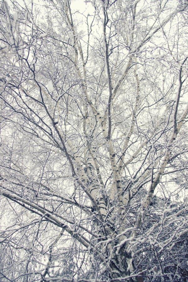 冠和用雪报道的树枝反对天空 冬天晴朗的冷淡的天 背景蓝色白色 底视图 免版税库存图片