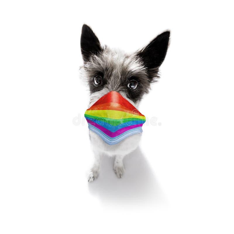 冠状病毒covid 19,同性恋自豪犬 免版税库存照片