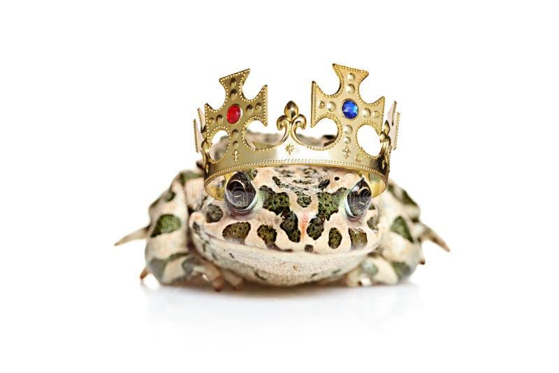 冠青蛙 库存图片