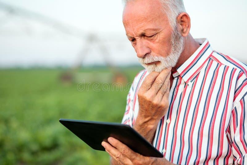 冥想一会儿的担心的资深农艺师或农夫使用在大豆领域的一种片剂 免版税库存照片