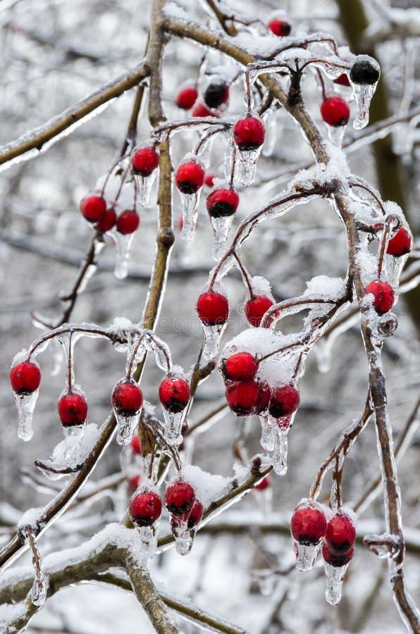 冬天。冰。 免版税图库摄影