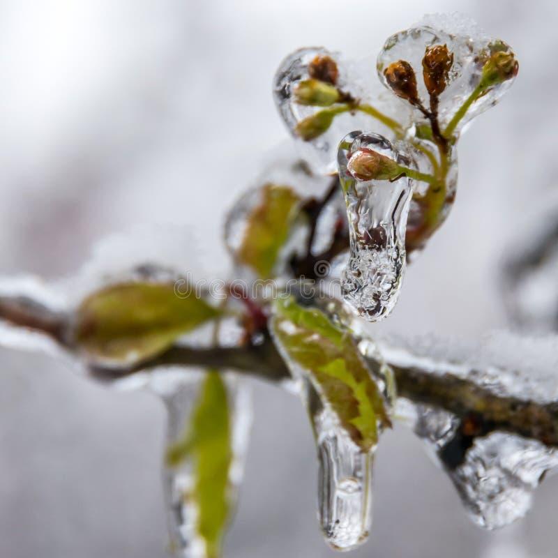 冬天。冰。 免版税库存图片