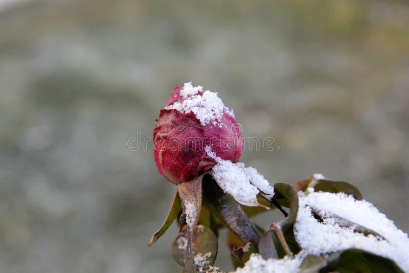 冬天上升了 库存图片