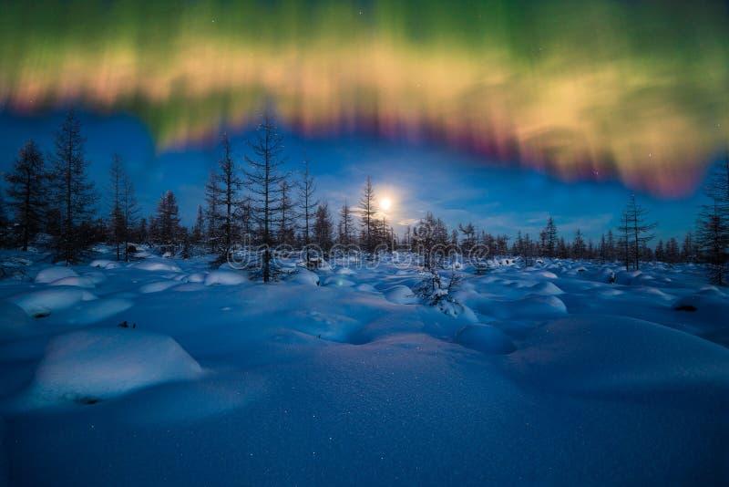 冬天与森林、月亮和北极光的夜风景在森林 免版税库存照片