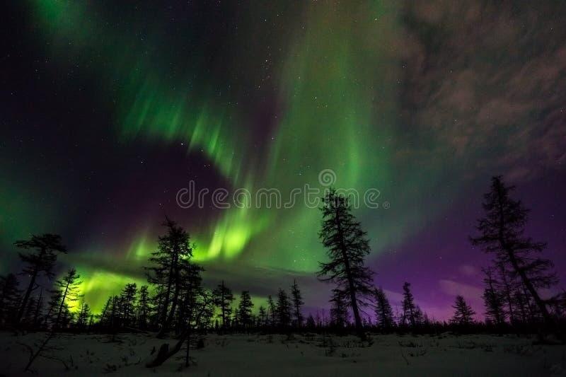 冬天与森林、路和极光的夜风景在树 免版税库存图片