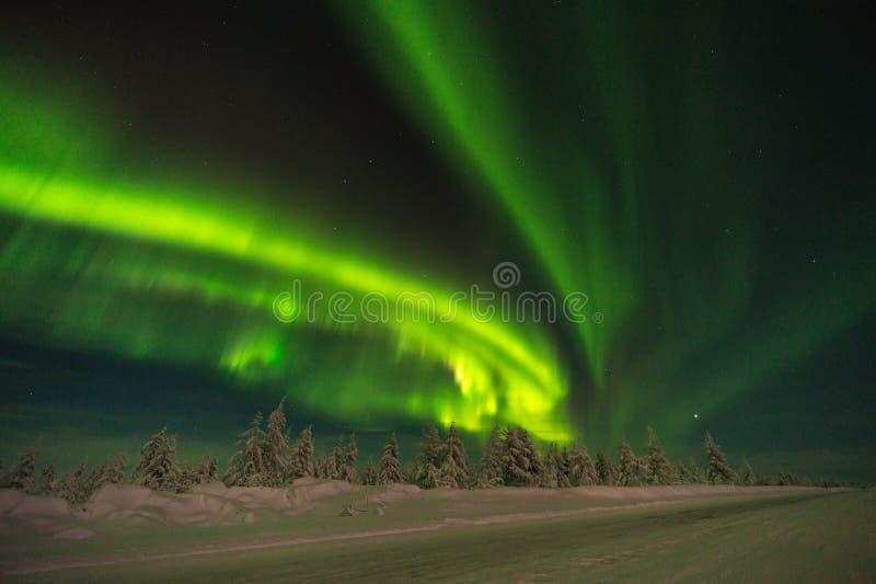 冬天与森林、路和极光的夜风景在树 库存照片