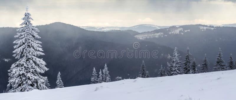 冬天与积雪的杉树的山风景 库存照片