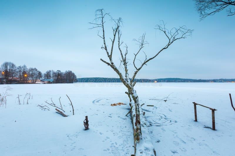 冬天与老桦树的结冰的湖风景 免版税库存照片