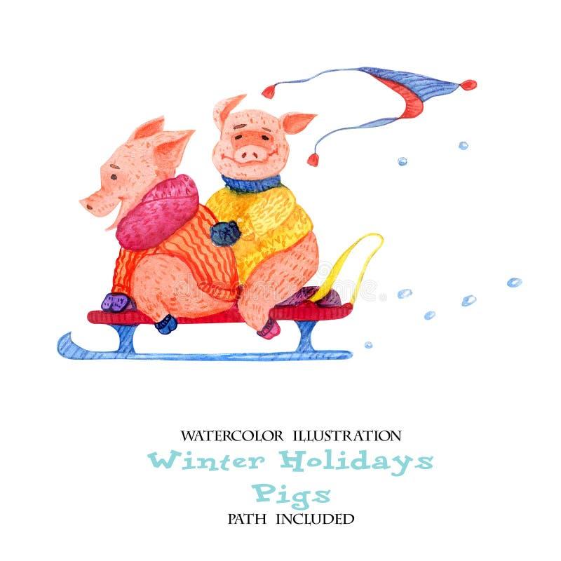 冬天乐趣猪的水彩例证 两头猪在雪撬 库存例证. 插画图片