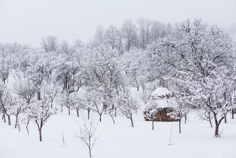 冬天乡下庭院 免版税图库摄影