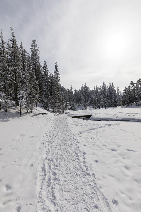 冬天供徒步旅行的小道在Langis通过一个新多雪的风景带领 免版税图库摄影