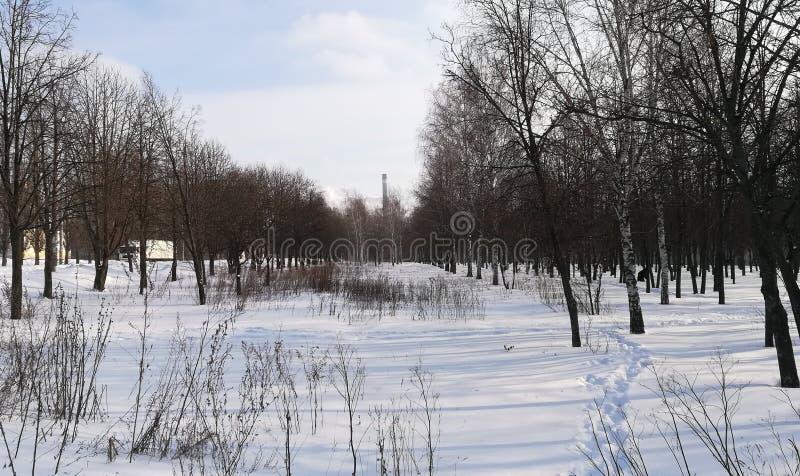 冬天公园开始春天从许多下雪和许多树 免版税库存照片
