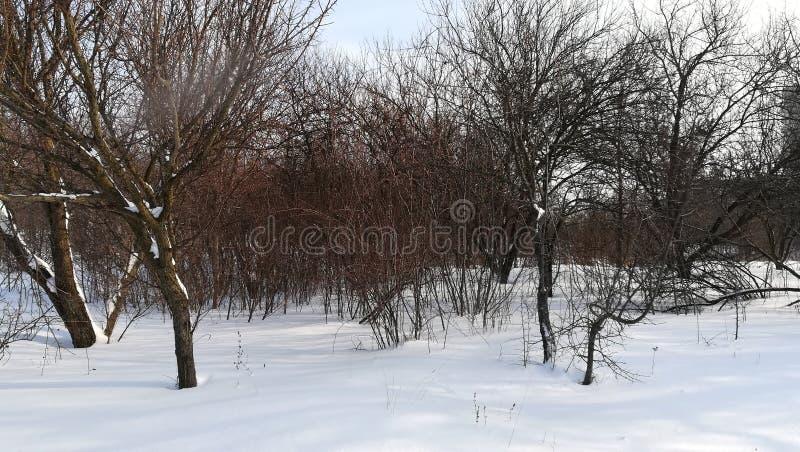 冬天公园开始春天从许多下雪 库存图片