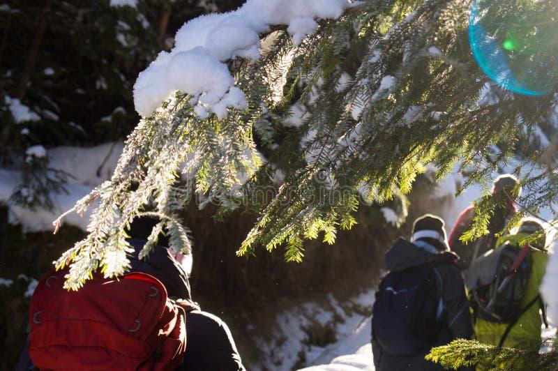 冬天冒险 远足在森林喀尔巴汗里 乌克兰 免版税库存照片