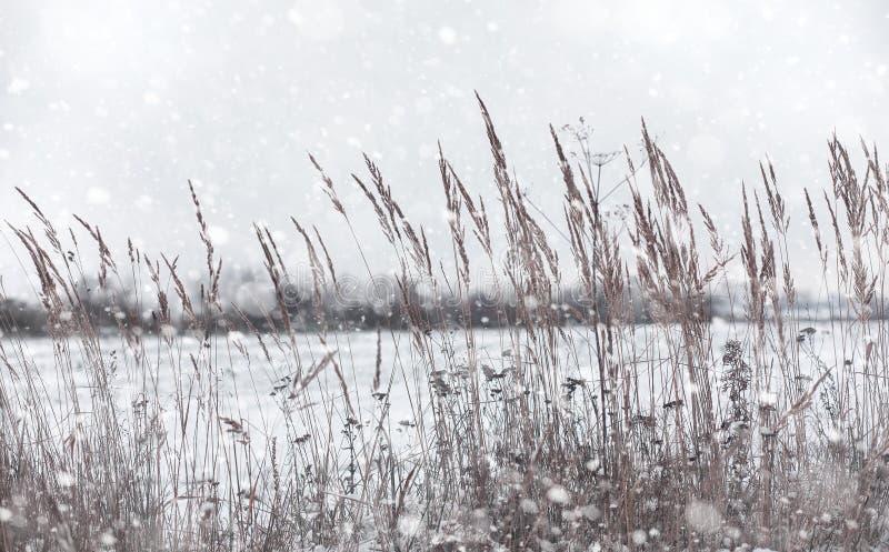 冬天冬天森林森林风景在一个晴天 雪c 免版税图库摄影