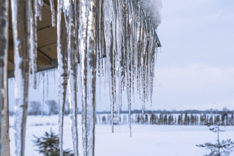 冬天冰柱从屋顶房檐在多雪的自然背景的垂悬