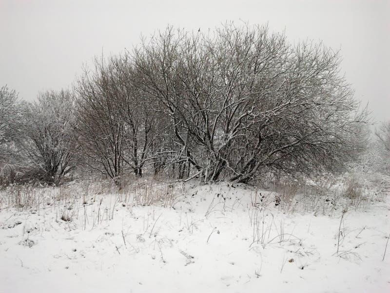 冬天印象-黑白05 库存照片